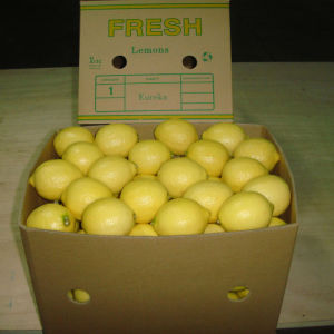 Exported Quality of Chinese Fresh Lemon/ pictures & photos