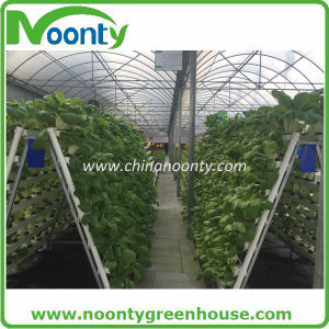 Garden/Farm/Tunnel Multi-Span Plastic Film Greenhouses for Rose/Potato pictures & photos
