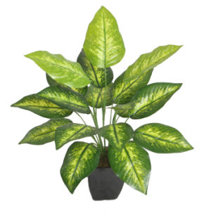 Natural Looking Artificial Plants of Dieffenbachia pictures & photos