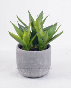 Artificial Succulent Plants in Cement Pot for Home Decoration