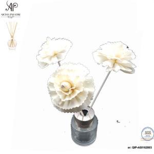 Ap Reed Diffuser DIY Rattan Dry Sola Flower 8mm Dianthus Caryophyllus 6PCS/Box pictures & photos