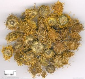Inula Flower Extract /Inula Flower P. E pictures & photos