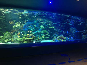 Aquarium pictures & photos