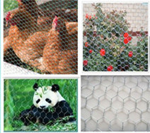2015 Hot Sale Hexagonal Wire Mesh/Chicken Mesh pictures & photos