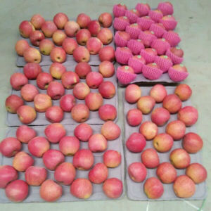 Top Quality of Chinese Fresh Red Qinguan Apple pictures & photos