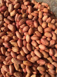 Peanut Kernels 28/32 pictures & photos