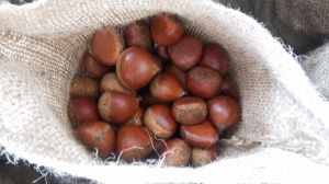 40-60PCS/Kg for Fresh Red Chestnut pictures & photos