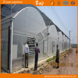High Cost Performance Plastic Film Greenhouse for Planting Vegetables pictures & photos