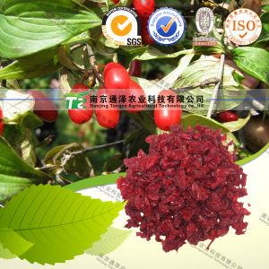 100% Pure Natural Herb Medicine Fructus Corni pictures & photos