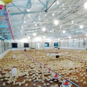 Full Set High Quality Automatic Poultry Farm Machinery for Broiler pictures & photos