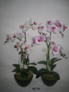 2012 New Style Three Stems Orchid Artificial with Black Ceramics Pot (MH-025)