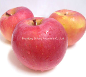 FUJI Apple in China pictures & photos