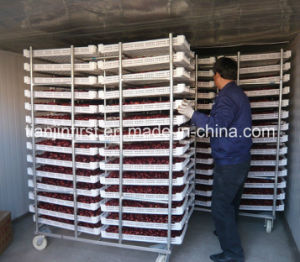 Industrial Food Fruit Freeze Dryer Machine/Vacuum Freeze Drying Machine pictures & photos