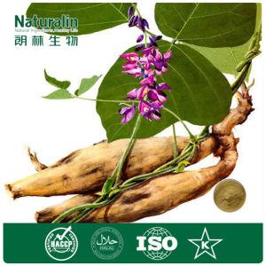 100% Natural Pueraria Lobata Extract Powder 40% Puerarin HPLC