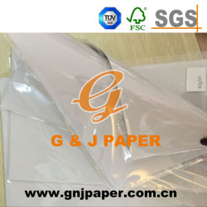 Good Price Tracing Paper Roll in 1 Roll Per Box pictures & photos