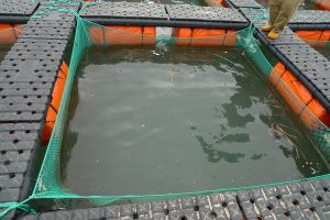 HDPE Tilapia Cage pictures & photos