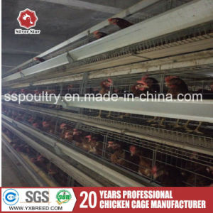 Cheap Poultry Farm Wire Netting Chicken Layer Cages for Sale pictures & photos