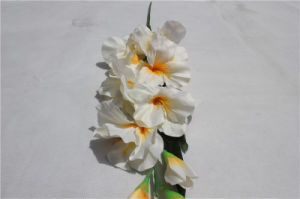 Latex Real Touch Cheap Wholesale Artificial Flowers White Orchid Phaleanosis pictures & photos