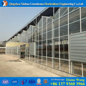 Top Quality Multi Span Glass Greenhouse with Hydroponic System pictures & photos