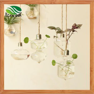 Hanging Glass Vase Water Flower Vases pictures & photos