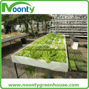 Commercial Dft Hydroponics Gutter System for Cucumber Growing with Farm Single and Multi-Span Plastic Film Greenhouse pictures & photos