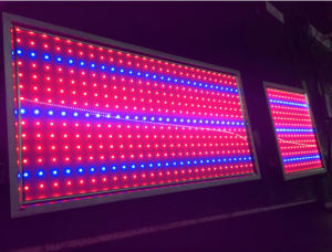 300*300mm 300*600mm LED Panel Grow Light for Indoor Lighting pictures & photos