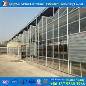 Promotion Professional Manufacturer Glass Green House for Pepper pictures & photos