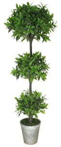 Evergreen Chinese Topiary Plant for Decoration pictures & photos