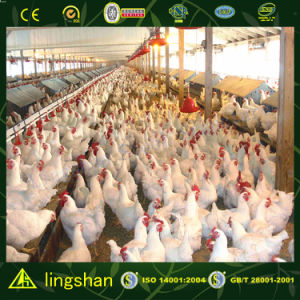 Large Space Steel Poultry House in Panama--ISO9001: 2008 (SSPH) pictures & photos