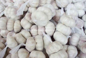 Pure White and Normal White Garlic