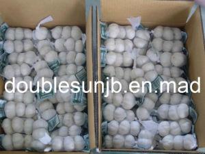 Fresh Normal White Jinxiang Garlic (2014new crop 5.5cm)
