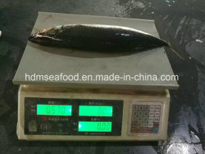 Big Size New Catching Fish 400-500&500g+ Frozen Pacific Mackerel pictures & photos
