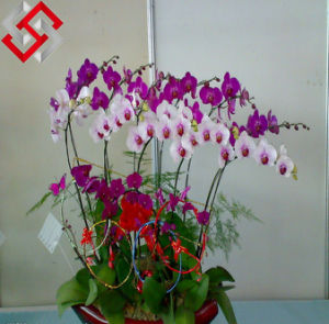 Orchid Made in China, Artificial Foam Flower for House Decoration