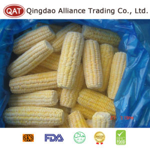 IQF Frozen Super Sweet Cut COB Corn pictures & photos