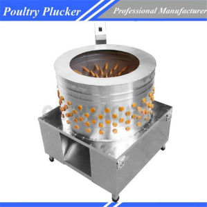 High Quality Commercial Automatic Poultry Plucker Equipment Chz-N80 pictures & photos