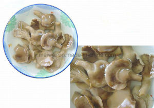 Canned Abalone Mushroom pictures & photos