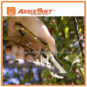 Garden Secateurs Floral Pruners Drop Forged Grape Shears with Wooden Handles pictures & photos