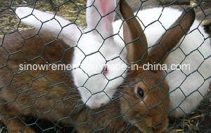 Hex Plaster Chicken Wire Mesh pictures & photos