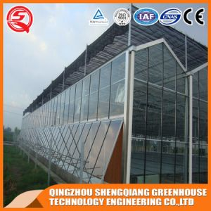 Vegetable/Garden/Mushroom/Strawberry Agricultural Glass Greenhouse pictures & photos