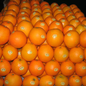 30-40mm/40-49mm Good Quality China Fresh Mandarin pictures & photos