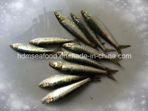 Frozen Seafood Sardine Fish for Market (Sardinella aurita) pictures & photos