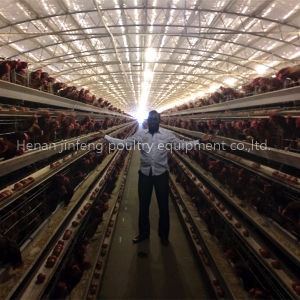Automatic Poultry Farm Equipment Machine for Chicken House (9LDT-5-1L0-25) pictures & photos