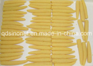 Canned Baby Corn (L / M size) pictures & photos