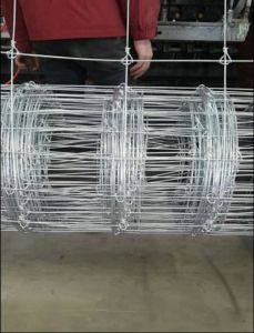 Australia 4FT 5FT Galvanized Fixed Lock Deer Fence/Cattle Fence/Farm Fence pictures & photos