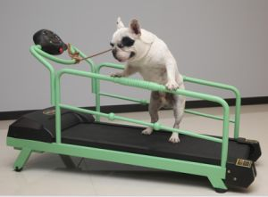 HD-900 Low Price Good Quality Pet Treadmills pictures & photos