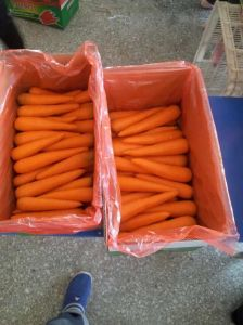 Red Fresh New Crop Carrot (80-150g) pictures & photos
