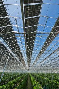 Photovoltaic Greenhouse for Vegetable and Flowers Growing pictures & photos