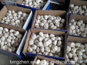 2017 New Fresh Hybridization Garlic From Jinxiang China. pictures & photos