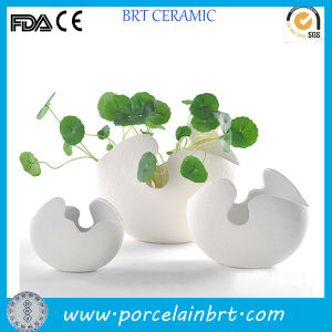 Creative Shell Decoration Bisque Pot Home & Garden pictures & photos