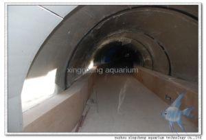 40m Acrylic Aquarium Tunnel pictures & photos